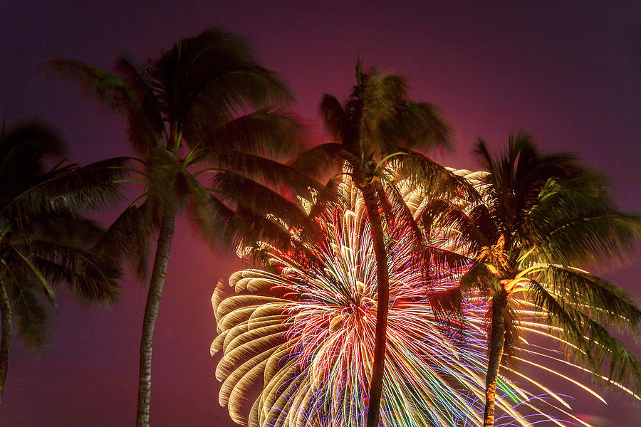Palm Trees Photograph - Peacock Palms by Sean Davey