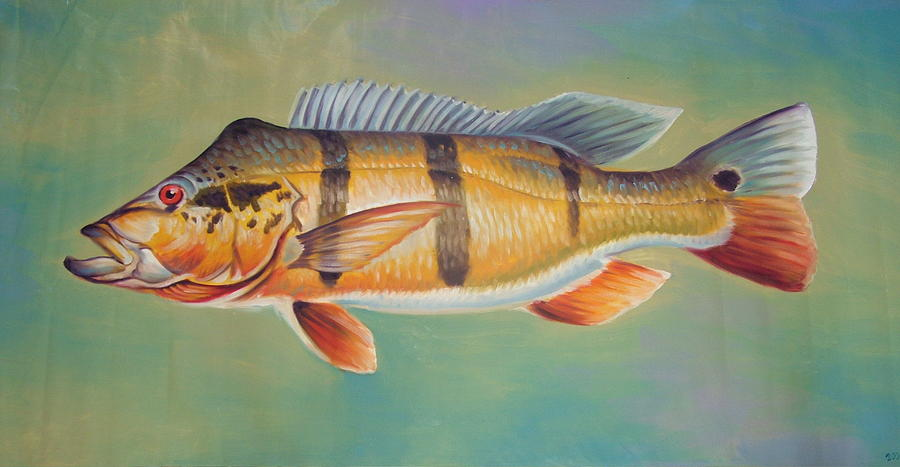 Fish Painting - Peacock Pavon by Charles Johnston