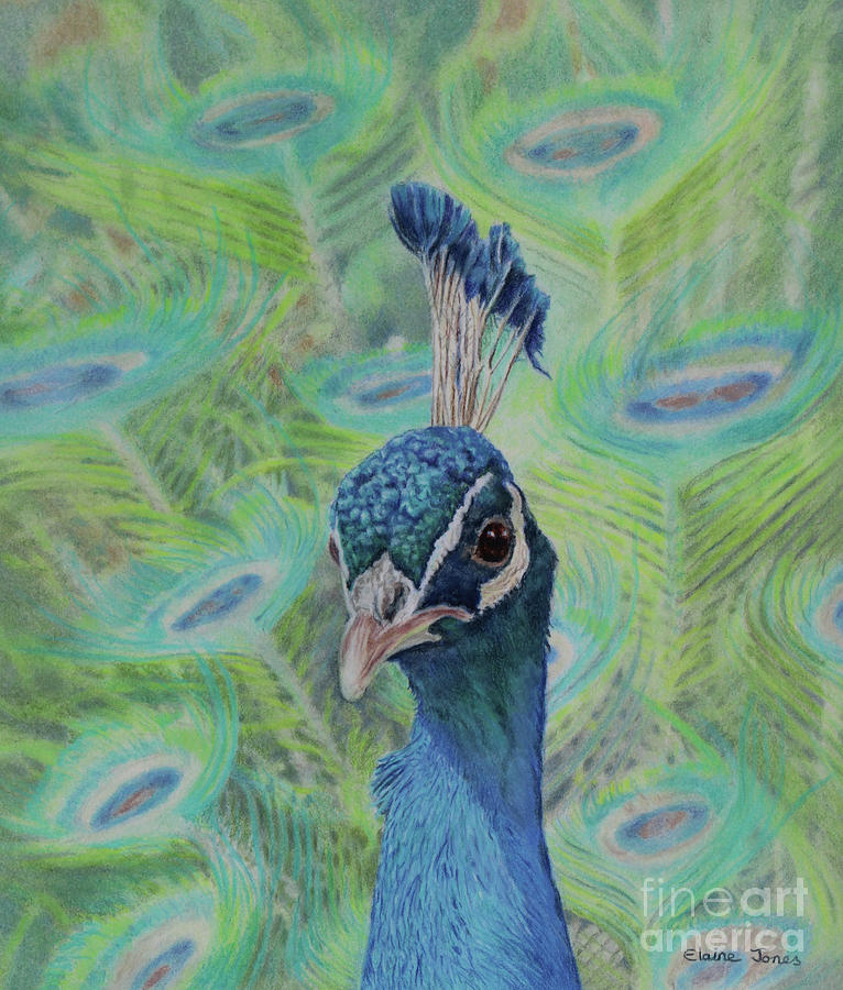 Peacock Portrait by Elaine Jones