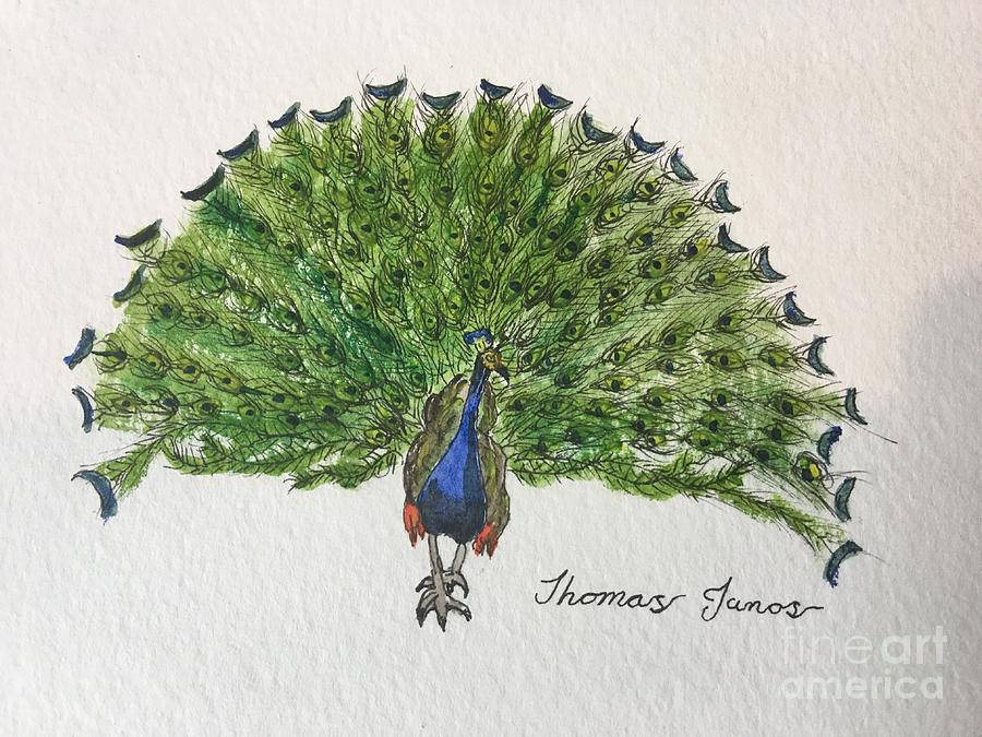 Peacock by Thomas Janos