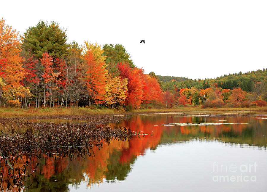 Peak New england Foliage by Staci Bigelow