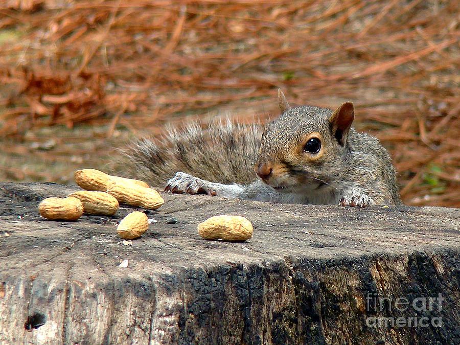 Squirrel Photograph - Peanut Surprise by Sue Melvin