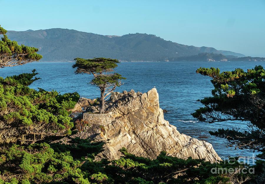California Photograph - Pebble Beach Iconic Tree With Sun Light At Dusk by PorqueNo Studios