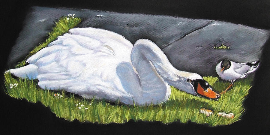 Swan Painting - Pecking Order by Vanda Luddy