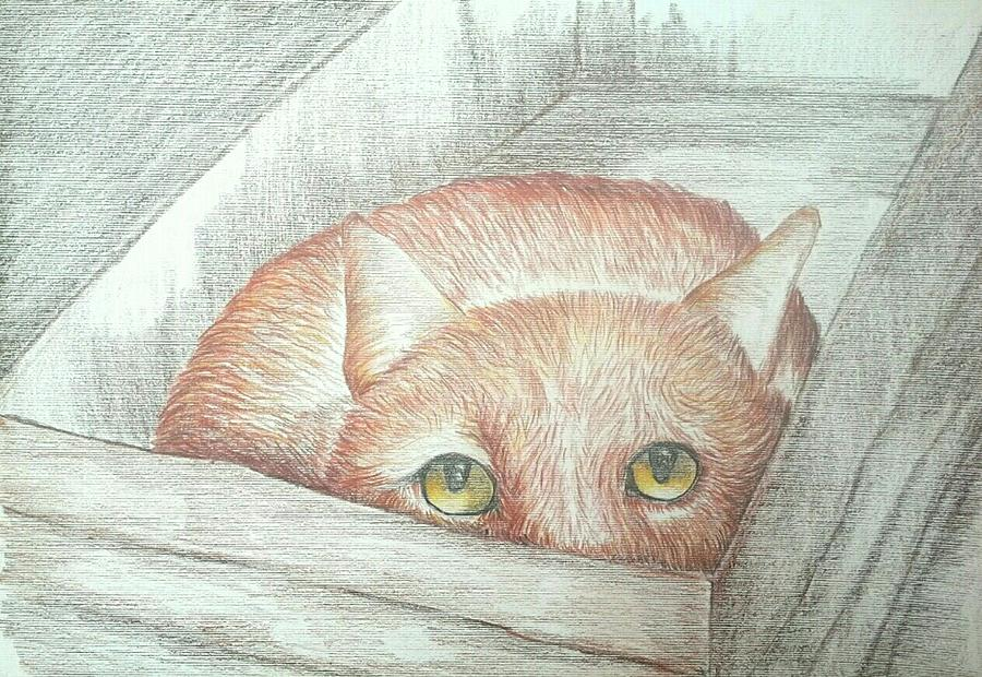 Peek a Boo by Alan Kennedy