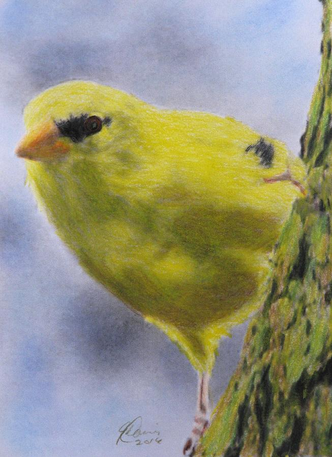 Goldfinch Drawing - Peek A Boo by Angela Davies