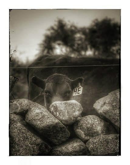Peek A Boo Photograph by James Caine
