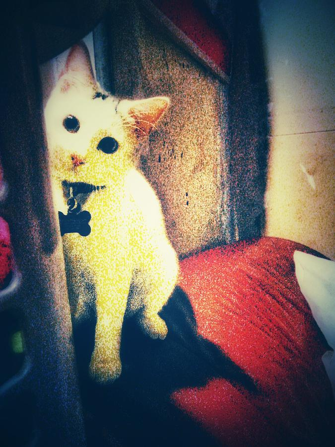 Cat Photograph - Peek-a-Boo Kitty by Eddie G
