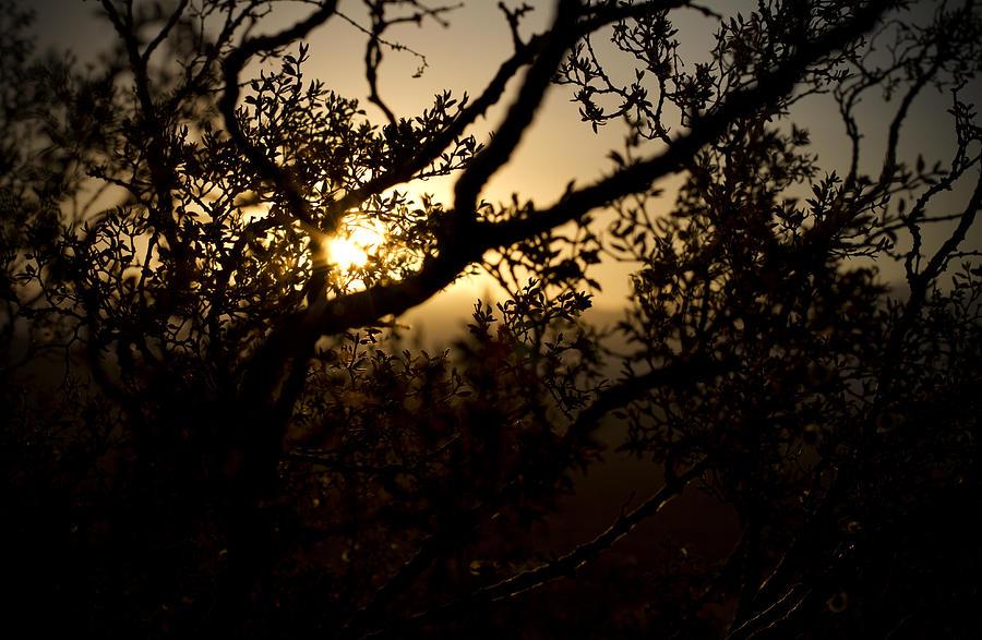 Desert Photograph - Peeking Sun by Mike Hill