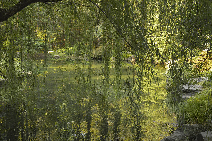 Weeping Willow Photograph - Peeking Through The Willows by Linda Geiger