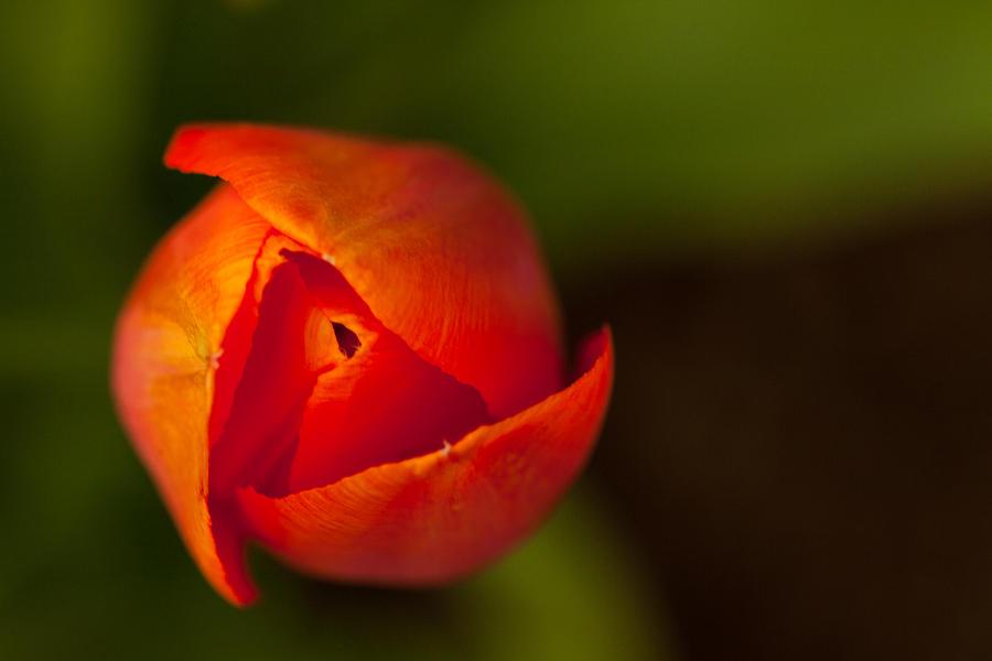 Peeling Away the Petals by Karol Livote