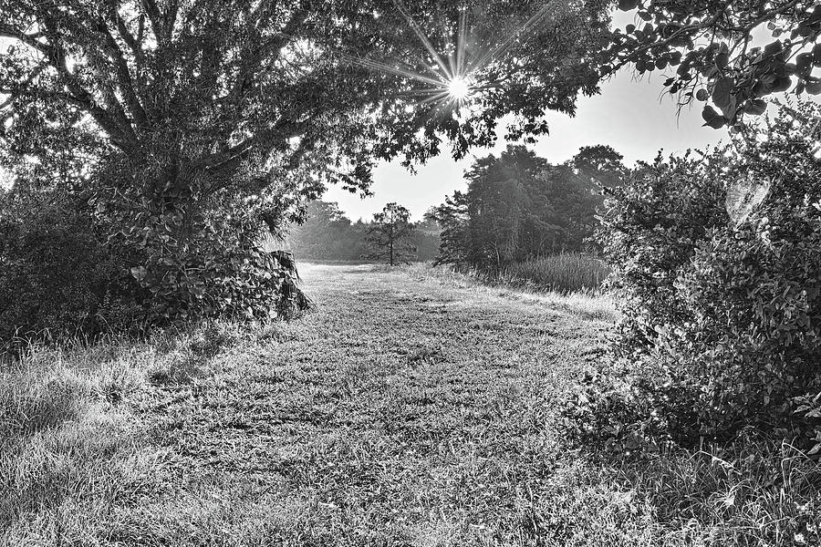 Everglades Photograph - Peircing Thru by Roberto Aloi