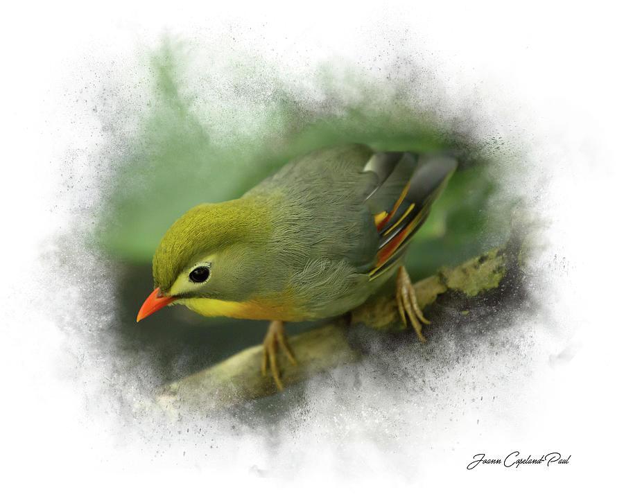 Pekin Robin by Joann Copeland-Paul