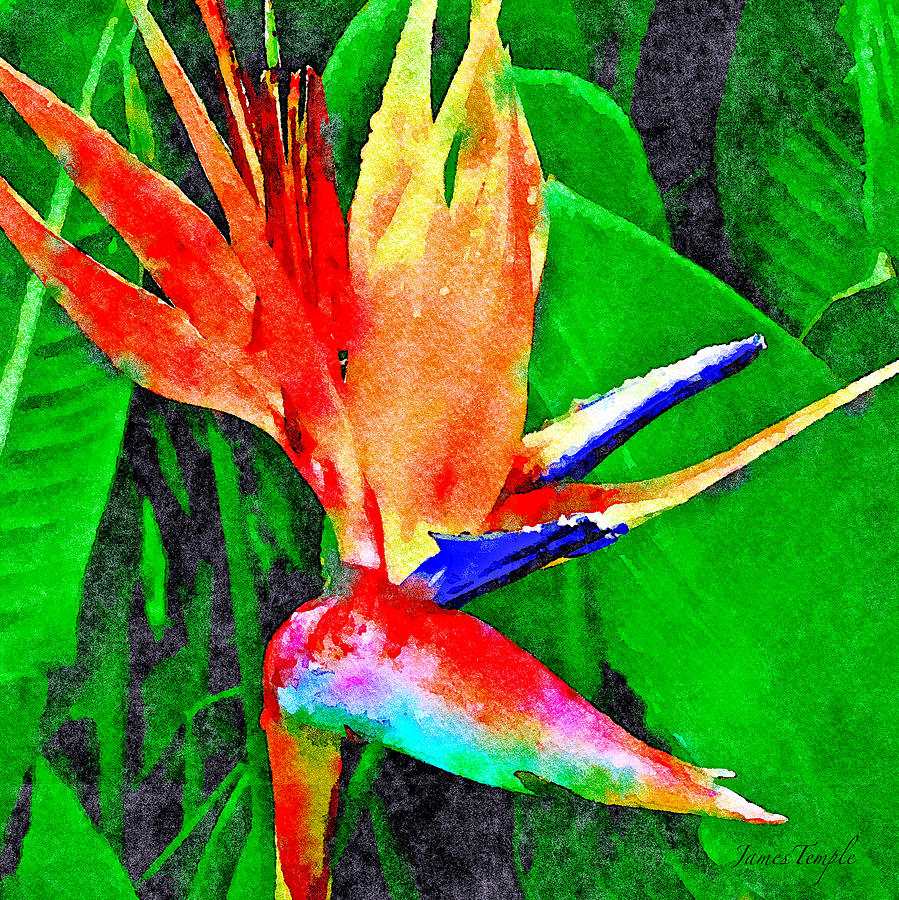 Bird Of Paradise Digital Art - Peles Fire by James Temple