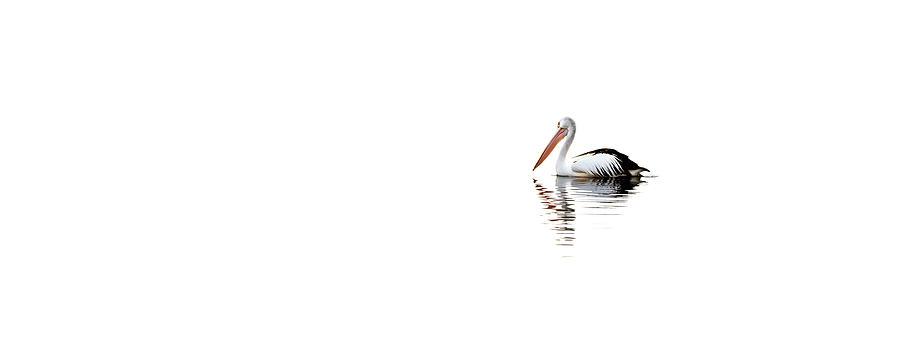 Central Coast Photograph - Pelican Adrift by Az Jackson