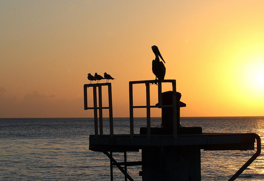 Key West Photograph - Pelican And Friend by Rebecca Cozart