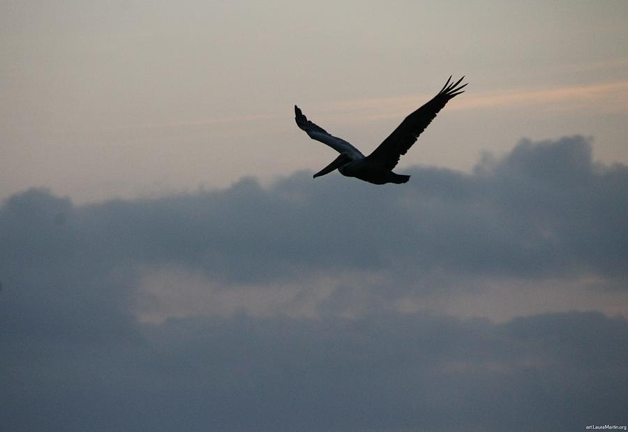 Pelican Photograph - Pelican At Dusk by Laura Martin