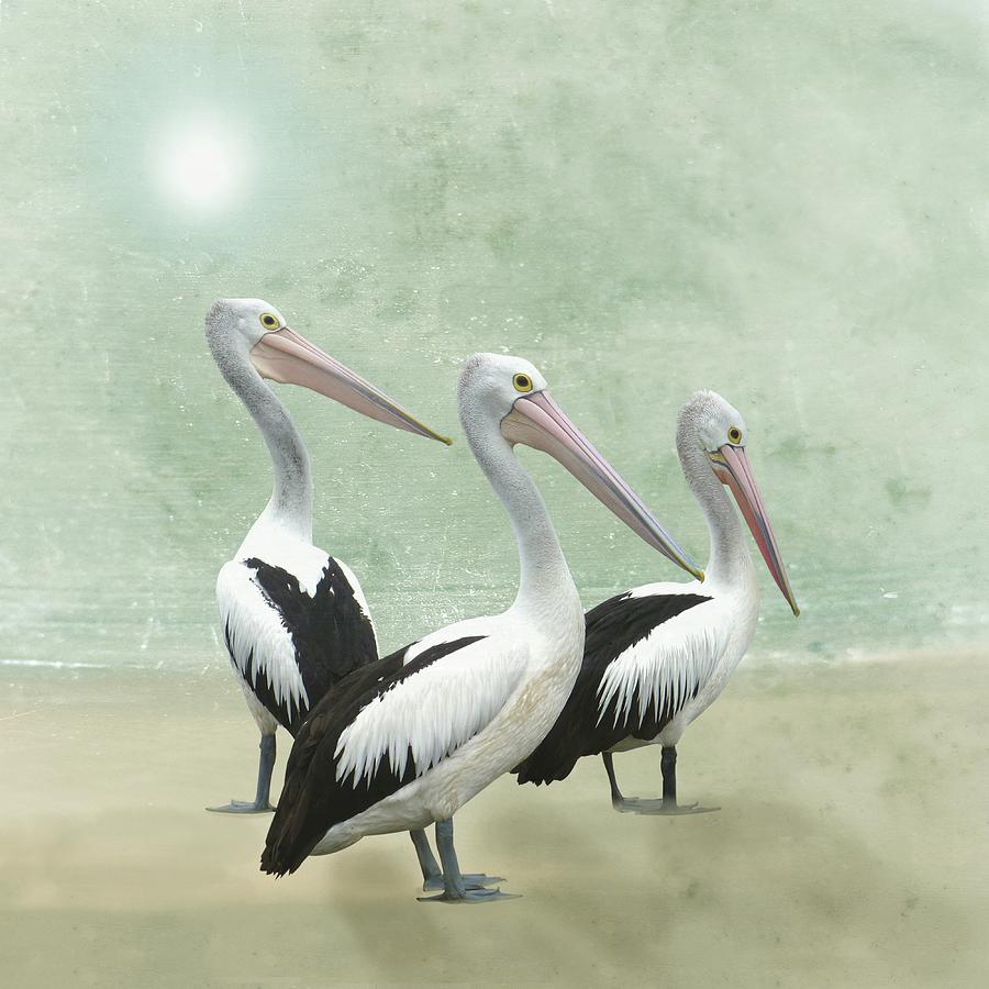 Pelican Beach by David Dehner