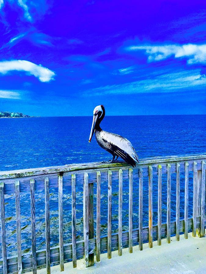 Pelican Photograph - Pelican by Carmen Clark