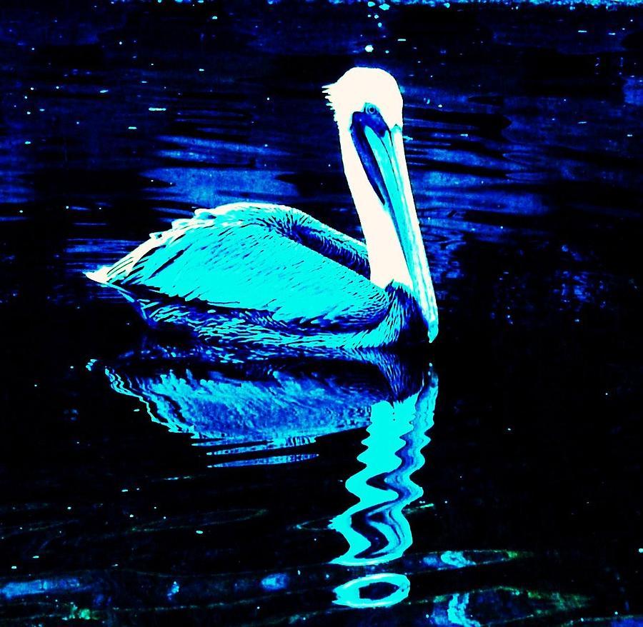 Pelican Photograph - Pelican by Daniele Smith