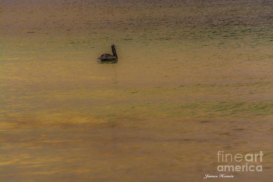 Pelican Photograph - Pelican Drift by James Hennis