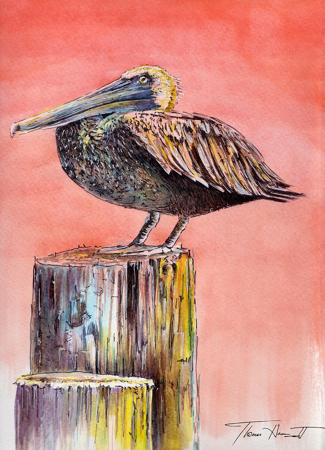 Pelican Painting - Pelican In Late Afternoon by Thomas Hamm