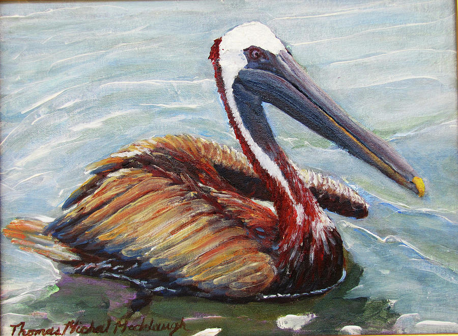 Pelican Painting - Pelican In The Water by Thomas Michael Meddaugh