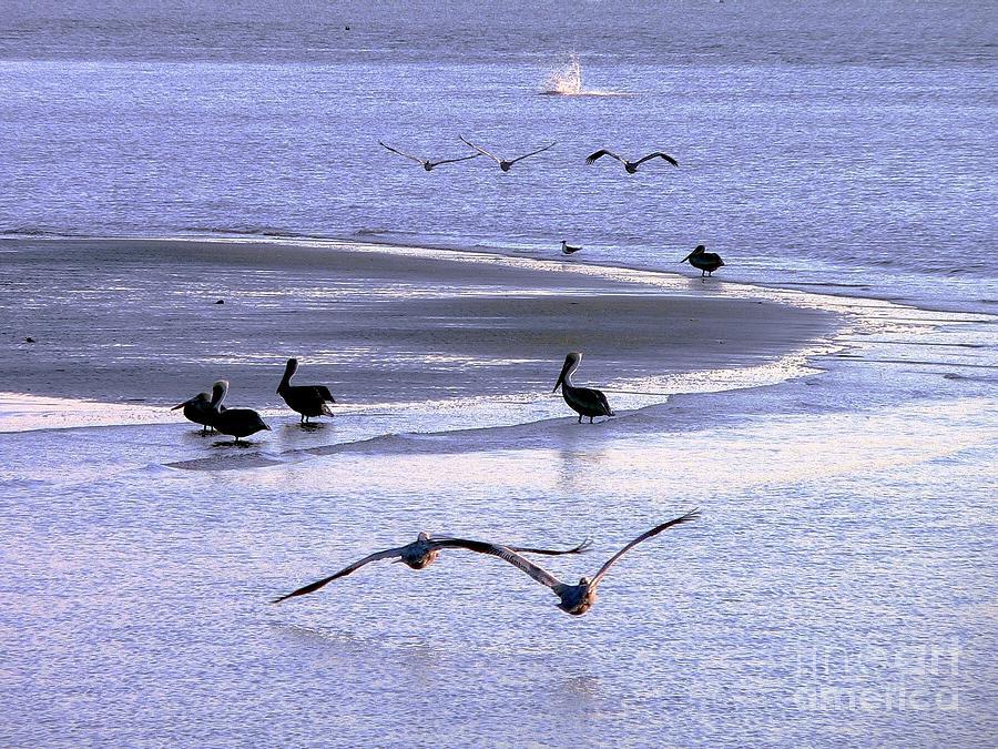 Pelican Island Photograph