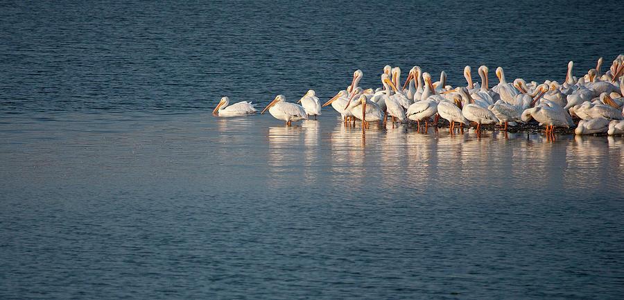 Birds Photograph - Pelican Island by Mark Braun