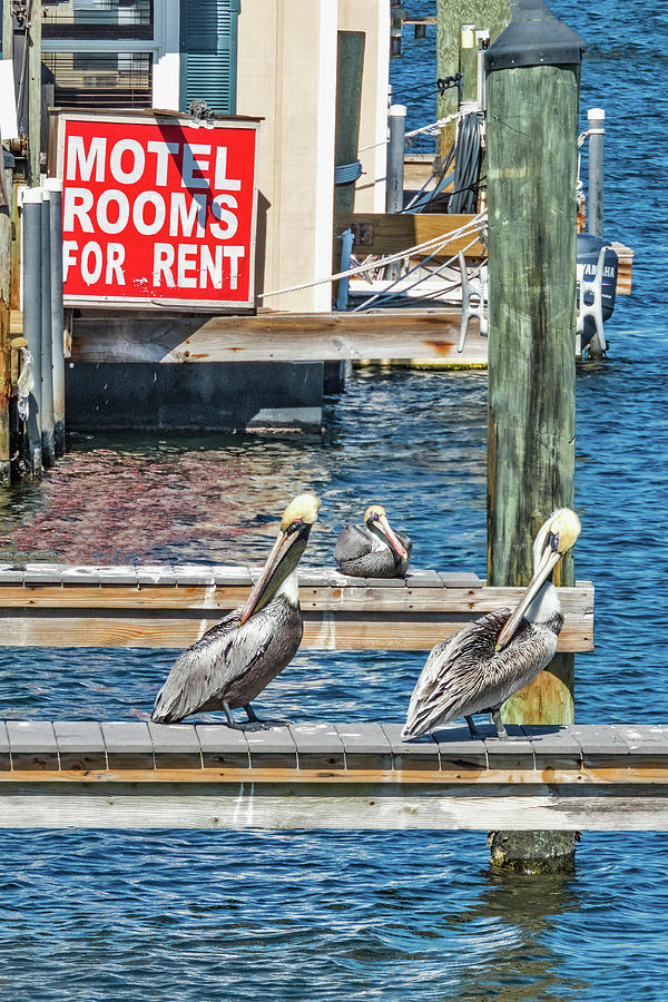 Pelican Motel by Bob Slitzan