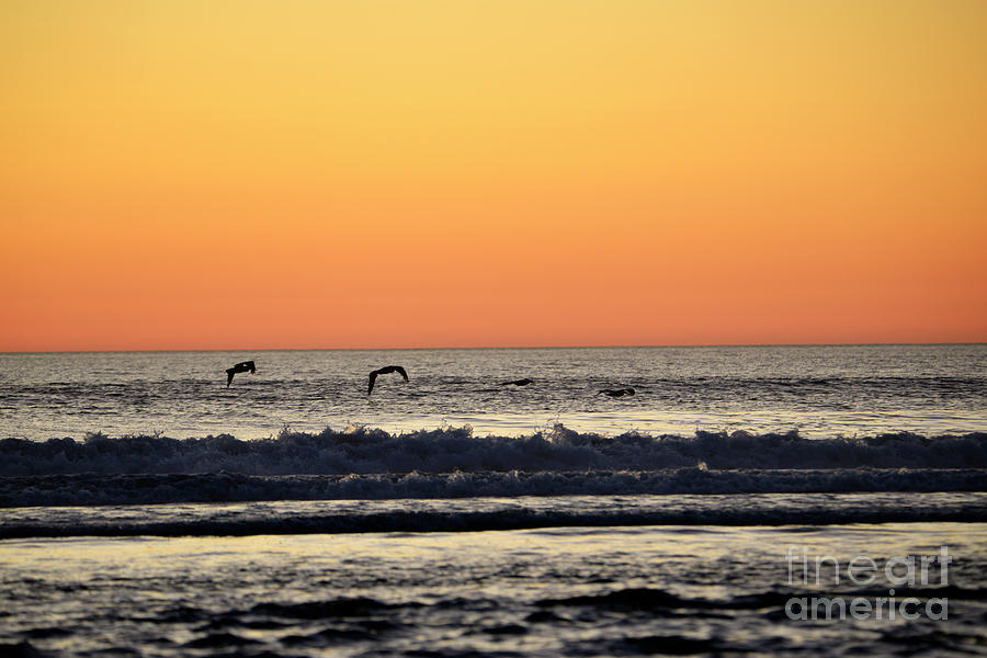 Photos Photograph - Pelican Sunset by Denise Bruchman