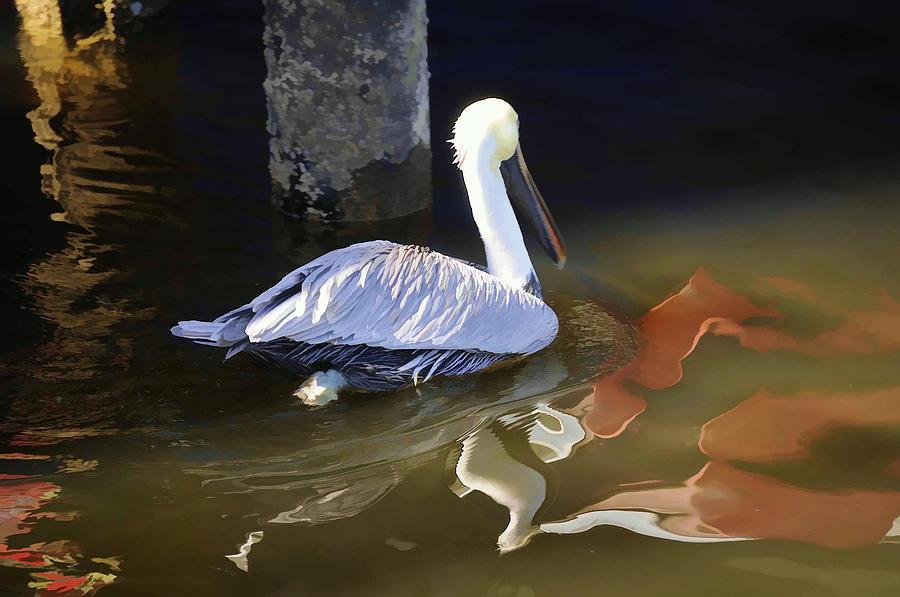 Pelican Photograph - Pelican Swim II by Jody Lovejoy