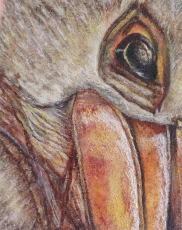 Pelican by Toni Willey