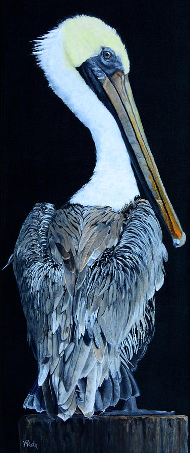 Pelican Painting - Pelican by Vicky Path
