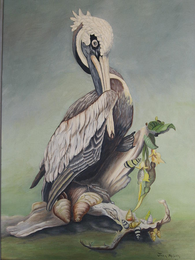 Bird Painting - Pelican With Shells by Joan Taylor-Sullivant