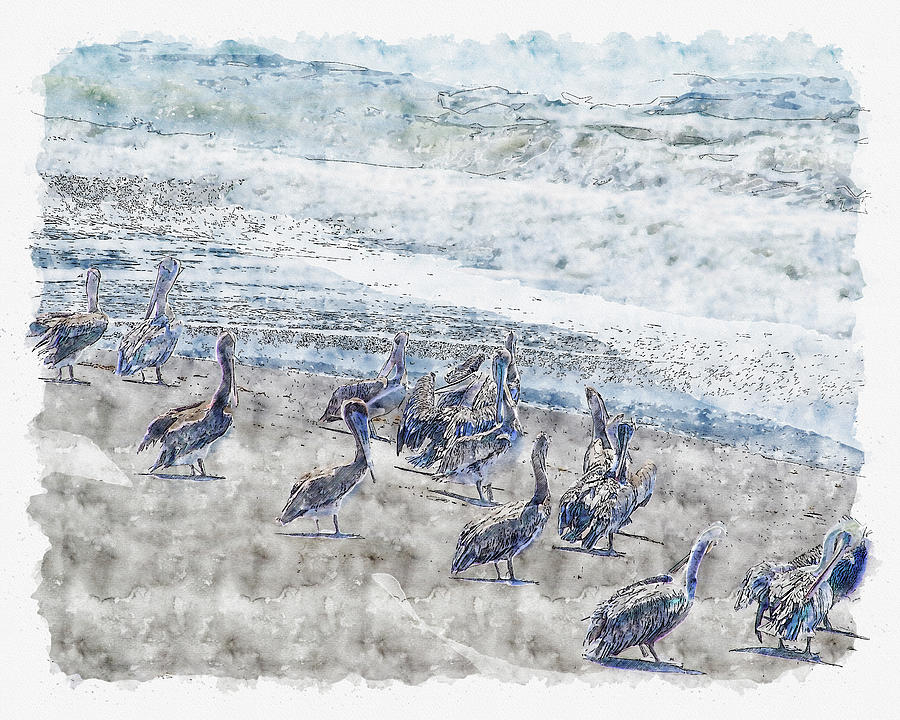 Pelicans by Anthony Murphy