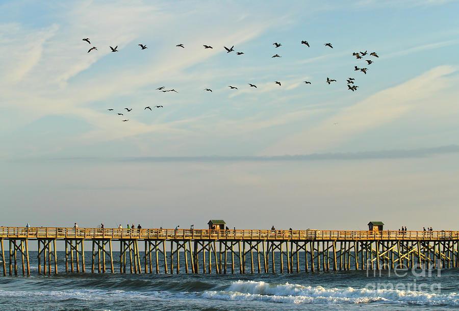 Flagler Photograph - Pelicans At Flagler Beach by Deborah Benoit
