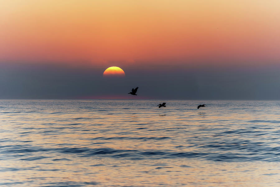 Pelicans at Sunrise by Paul Malcolm