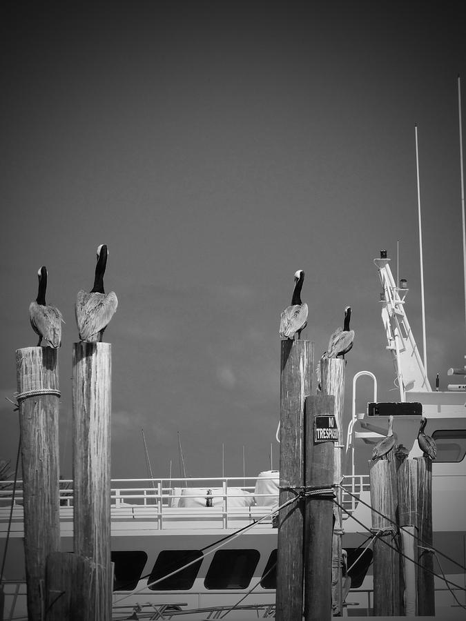 Pelicans Photograph - Pelicans Perched By Sailboat by Megan Verzoni
