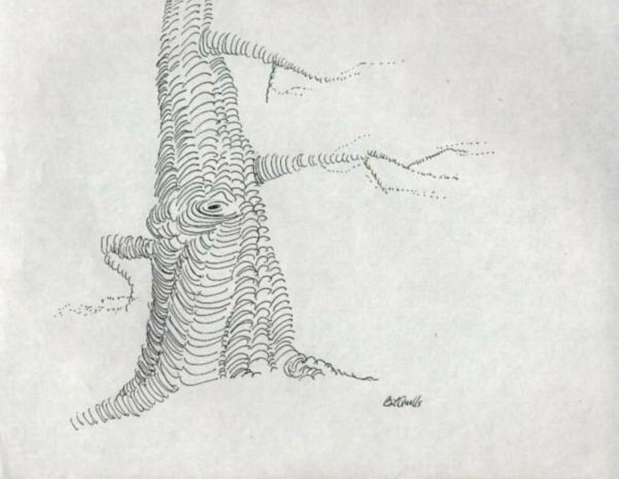 Tree Drawing - pen and ink Tree by B L Qualls