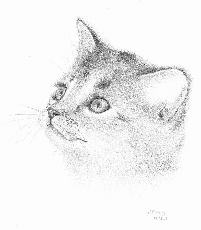 Pencil Drawing Of A Smiling Cat Drawing by Emmanuelle Fonsny