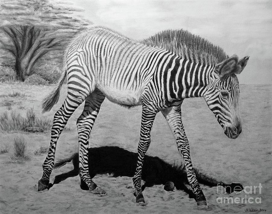 Zebra Painting - Penda by Jennifer Watson