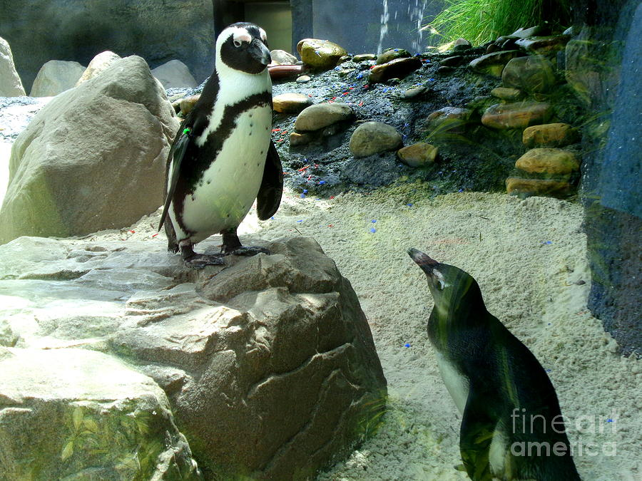 Penguin Friends by Jeanne Forsythe