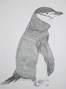 Print Drawing - Penguin by Joanie Arvin