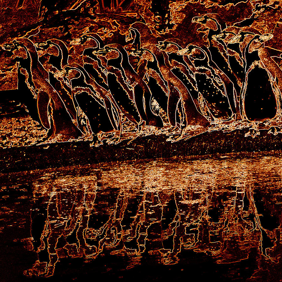 Penguin Photograph - Penguin Reflections by James Hill