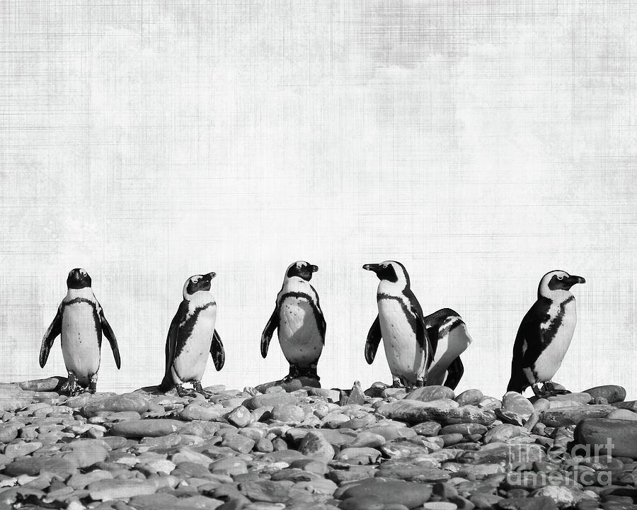 Penguin Photograph - Penguins by Delphimages Photo Creations