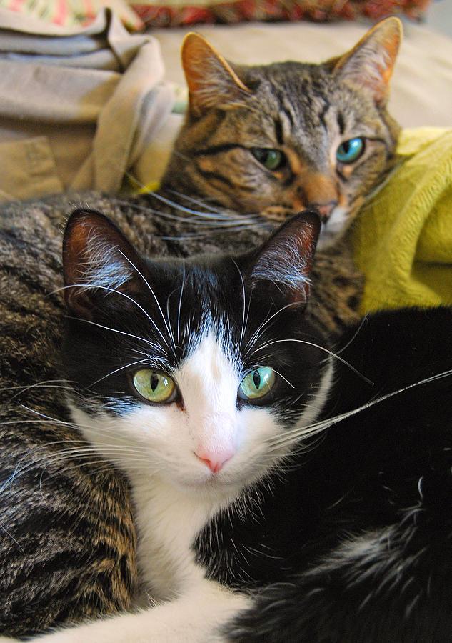 Cat Photograph - Penny And Baby by Tony Ramos