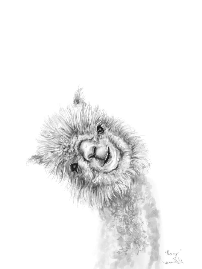 Llamas Drawing - Penny by K Llamas
