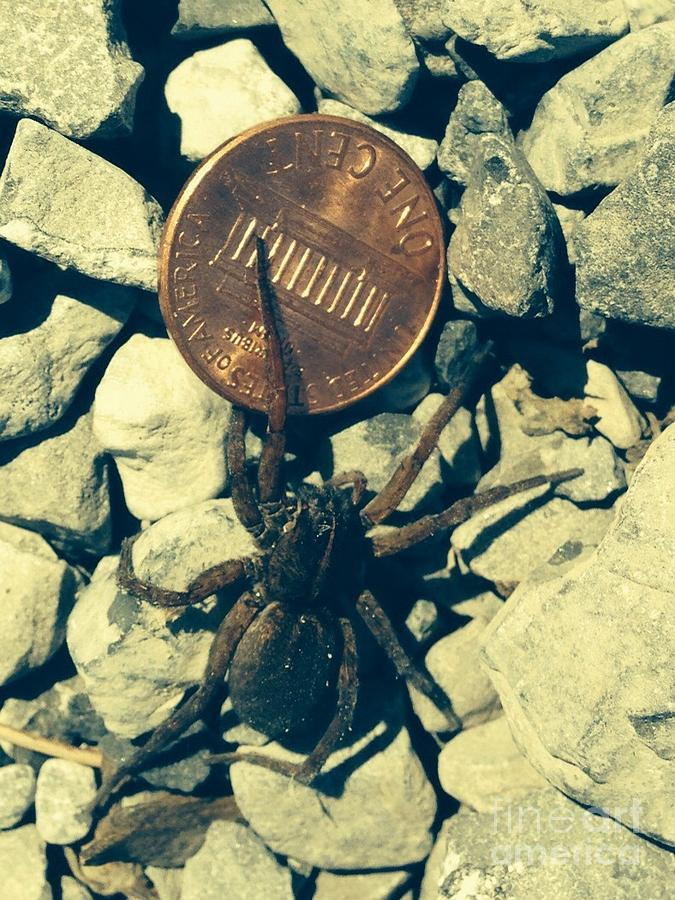 Spider Photograph - Penny Pinching Spider by Maureen Carr