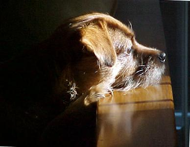 Dogs Photograph - Pensive Puppy by Linda A Waterhouse
